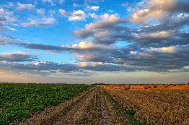 Тюменские фермеры поддерживают регион