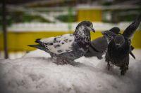 Морозы вернутся в Новосибирскую область на выходных.