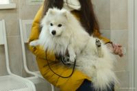 В столице Бурятии началась массовая вакцинация домашних животных.