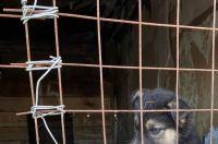 Ямальцы могут купить крупу и тушенку для бездомных животных из приюта