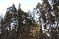 С 13 января за посещение Бузулукского бора необходимо будет заплатить 140 рублей.