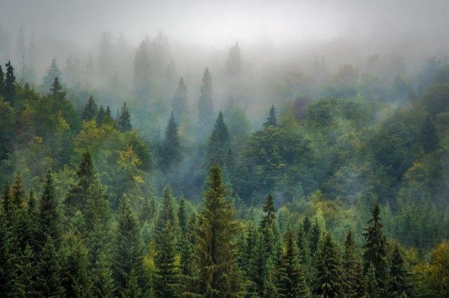 Вырубка леса будет производиться на территории Костенковского лесничества.