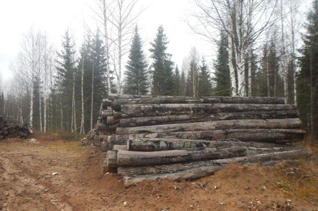 Незаконно вырубили 1388 деревьев.