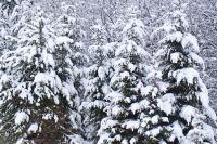 Мужчина свернул на лесовозную дорогу и застрял в снегу.