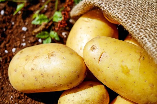 На прилавках российских магазинов может появиться картофель «экономкласса», размер которого будет от 3,5 до 5,5 сантиметров.