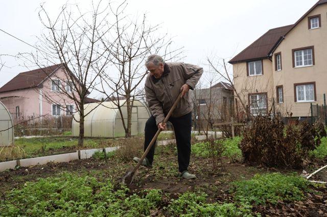 Более 17 миллионов рублей направит правительство Новосибирской области на поддержку садоводов в 2021 году. Деньги выделят из областного бюджета.