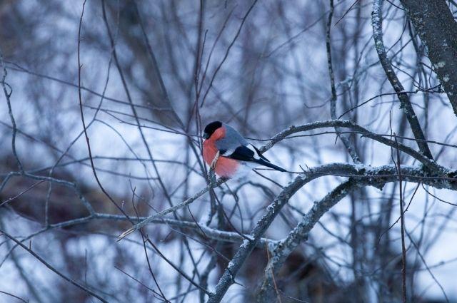 Красноярские синоптики рассказали о погоде в последний зимний месяц.
