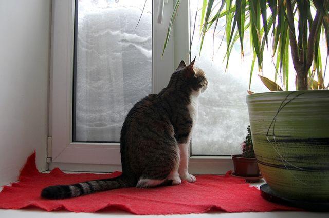 26 января: церковный праздник, приметы о кошках, календарь стрижек