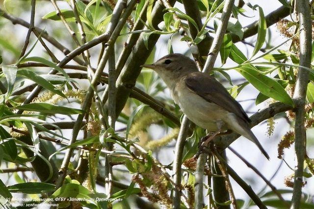 В заповедниках Оренбургской области в 2020 году обнаружили 72 новых вида животных. Фауна пополнилась 40 новыми видами жуков, двумя видами амфибий и 30 видами птиц.
