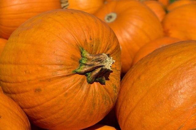 Для выращивания тыквы выделят 500 гектаров площади в Оренбуржье.