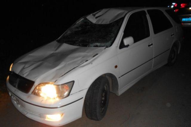 Лоси и косули погибли под колесами автомобилей