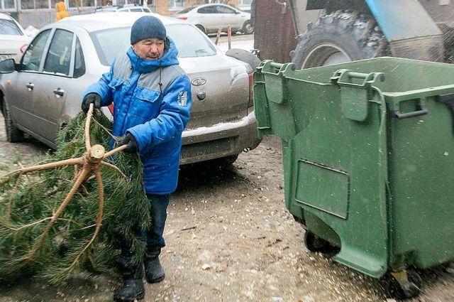 В Тюменской области продолжается работа по вывозу новогодних елок