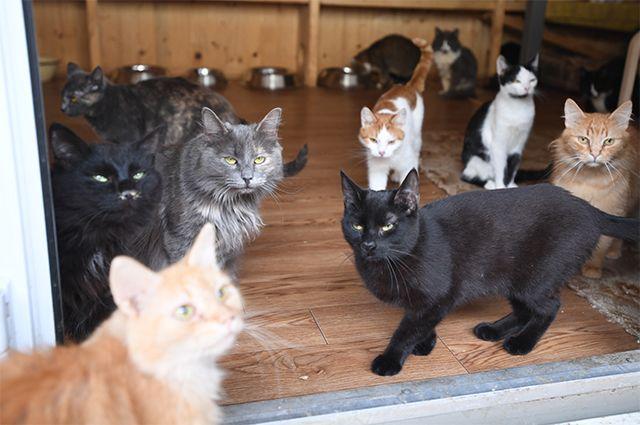 Невозможно подчинить. 16 вопросов и ответов про кошек