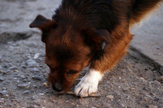 Активисты хотят составить реестр бездомных животных