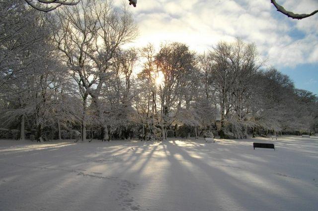 Съемки фильма будут проходить в зимнем лесу.