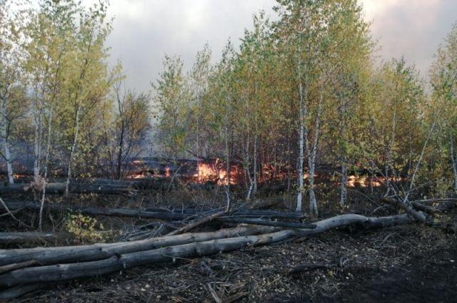 Работы по лесовосстановлению проведены на 193%