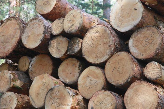 Он незаконно спилили 39 деревьев ели, сосны, пихты и берёзы.