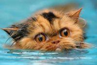 Тюменские спасатели помогли кошке, упавшей в колодец