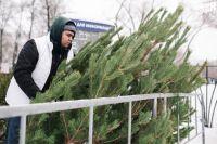 Тюменцы передали в зоопарк более 340 елок для животных