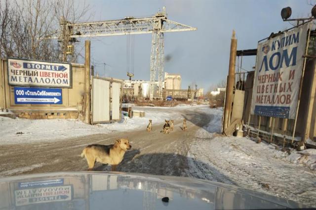 Собак для охраны предлагают брать в приютах.