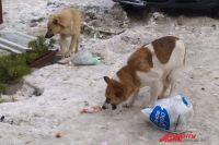 Владимир Уйба рассказал, как  в регионе решают проблему с бродячими собаками.