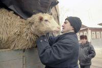 Подношения в виде овец - на Кавказе дело обычное.