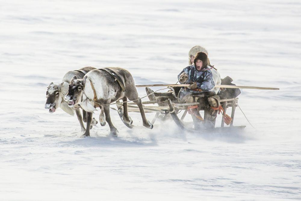 Для коренных жителей Крайнего Севера олени — настоящее достояние: это и еда, и жилье, и одежда и транспорт. Поэтому дети с самого раннего возраста умеют ездить на них на нартах.