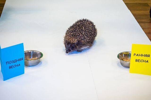 Парк флоры и фауны «Роев Ручей» провел необычный эксперимент.