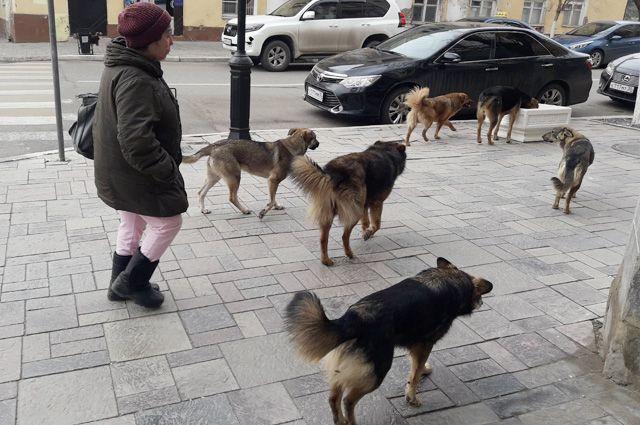Псы ведут себя вольно даже в центре города.