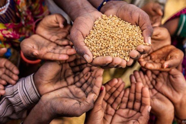 Земля контрастов. Сколько в мире голодающих и сколько еды идет на свалки