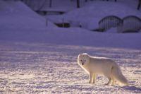 Животные выходят к людям в поисках пищи
