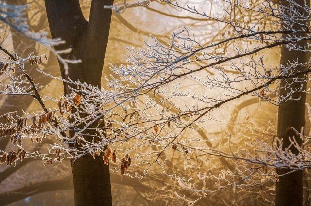 В некоторых районах Оренбургской области сохранится туман и гололед. Местами по региону пройдет мокрый снег и дождь.