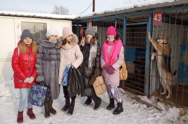 В тюменском приюте для животных появилась площадка безопасного волонтерства