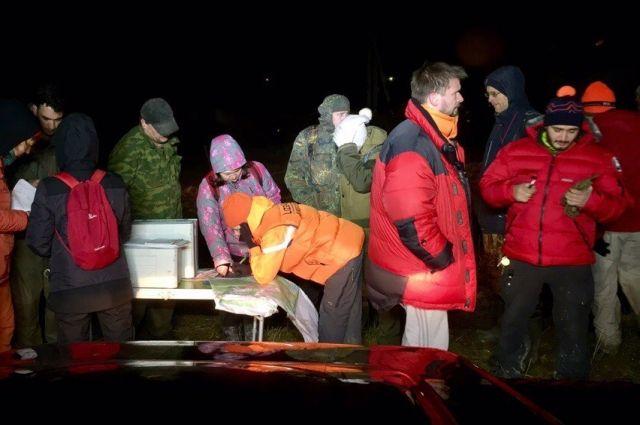 волонтеры выходят на поиски в любое время суток и в любую погоду