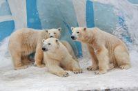 Медвежатам уже более двух лет