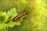 Тюменец развел дома тараканов, с ним будет судиться управляющая компания