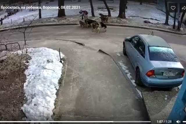 Нападение бездомных собак на школьницу попало на видео.