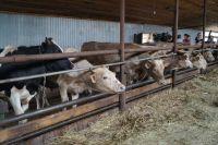 Идея проекта направлена на развитие фермерства в автономном округе