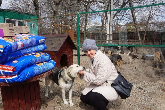 Судьбой бездомных животных занимаются преимущественно волонтёры