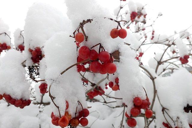 Циклон принесёт снегопады, сильный ветер и быстрое потепление на юге региона.