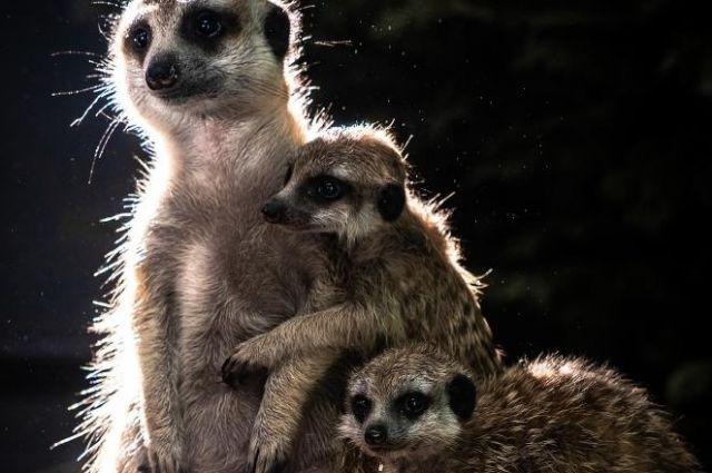 Истории любви животных расскажут в парке флоры и фауны в праздничный день..