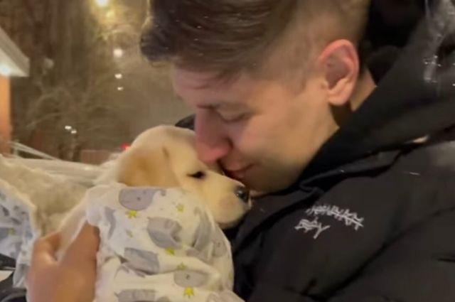 Новосибирский блогер Дава Манукян познакомил подписчиков с новым другом. Это щенок лабрадора.