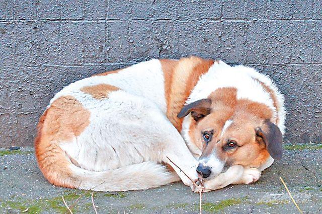 Власти сообщили подробности приюта для бездомных животных в Уфе