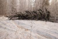 Лесной фонд получил ущерб на сумму более 2,5 миллионов рублей.