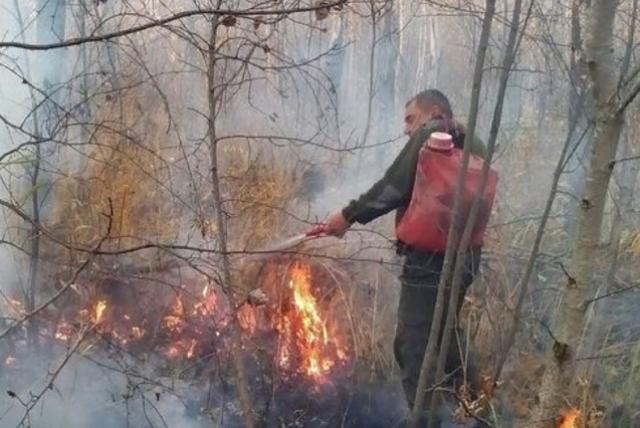 Эксперт считает, что высока вероятность возникновения пожаров на юге Новосибирской области, начиная с апреля.