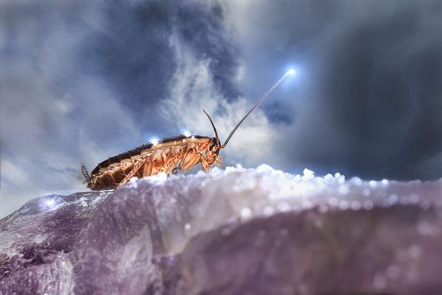 Тюменцы узнали, чем отпугнуть тараканов
