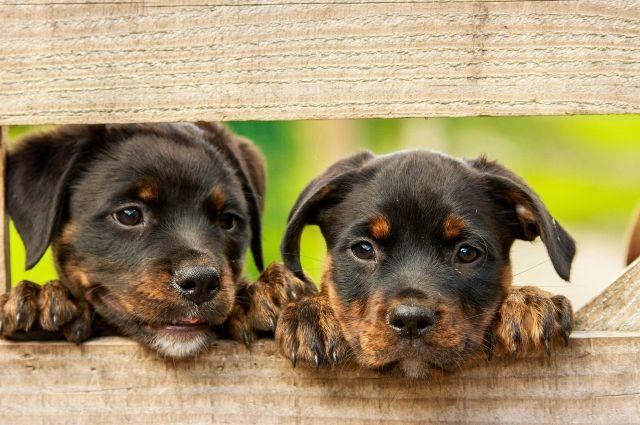 В приюте 260 собак.