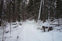 Простому человеку сложно понять все тонкости лесного законодательства.