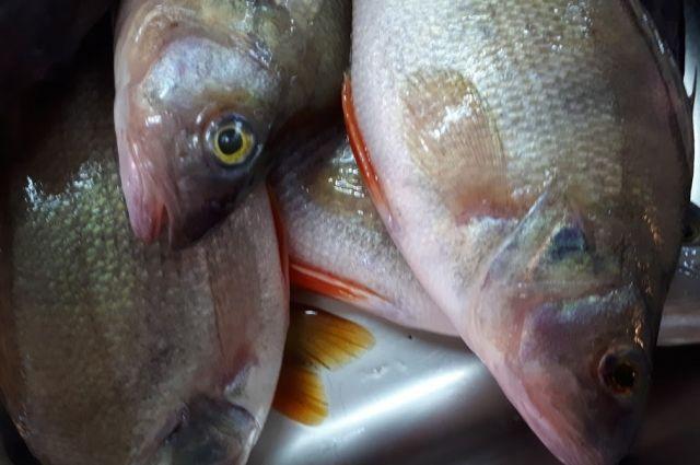 Заболевание передается через рыбу.