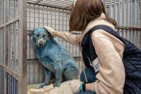 Собак с неестественным окрасом обнаружили в Дзержинске